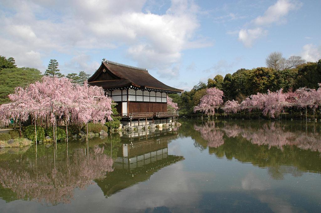 東神苑の紅しだれ桜