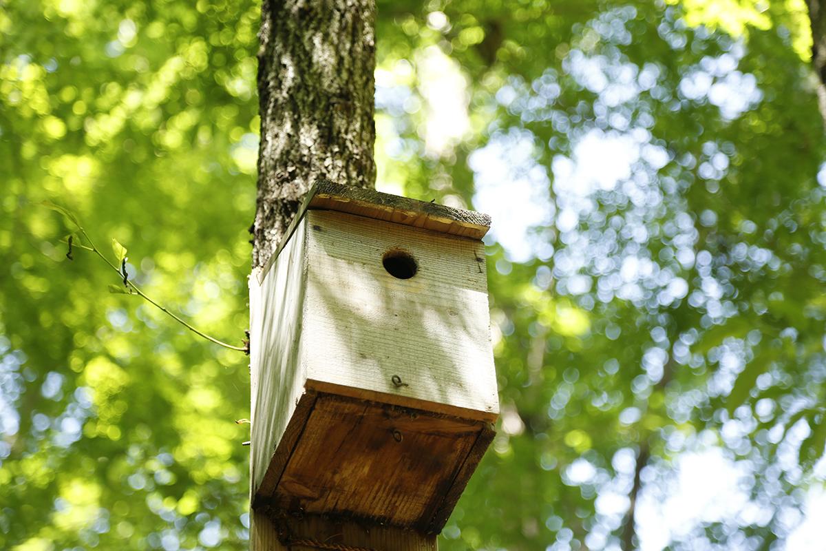 御苑では約100種の鳥が確認されています