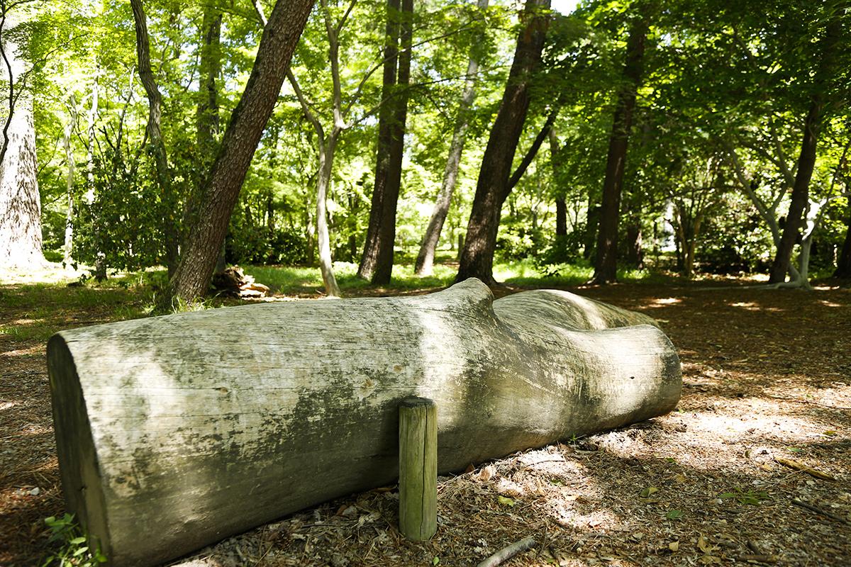 森の文庫の周囲にはベンチ代わりの倒木や切り株があります