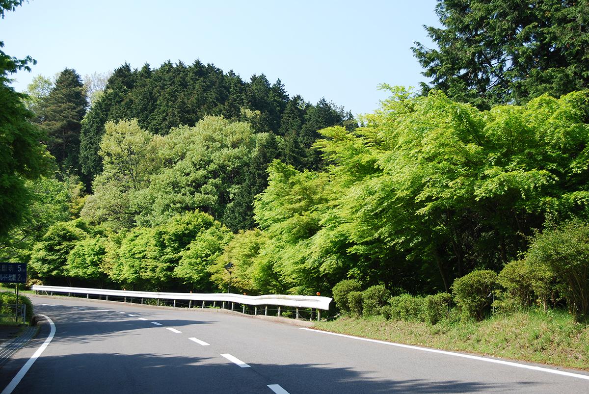 沿道には深緑の木々が立ち並ぶ夏のドライブウェイ
