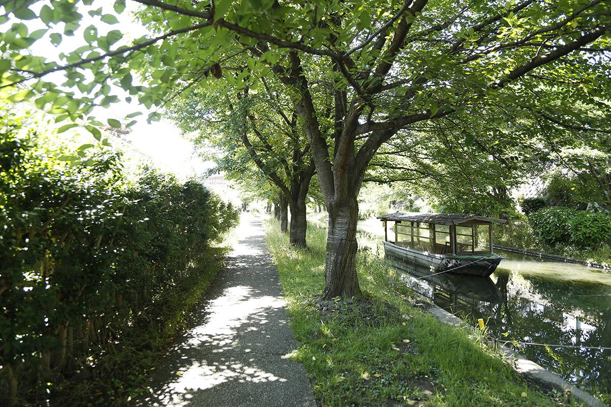 緑あふれる涼やかな濠川沿いの散策路