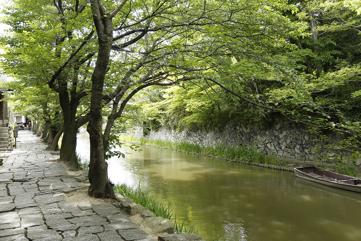 水路沿いに続く緑のトンネルが涼を感じさせます