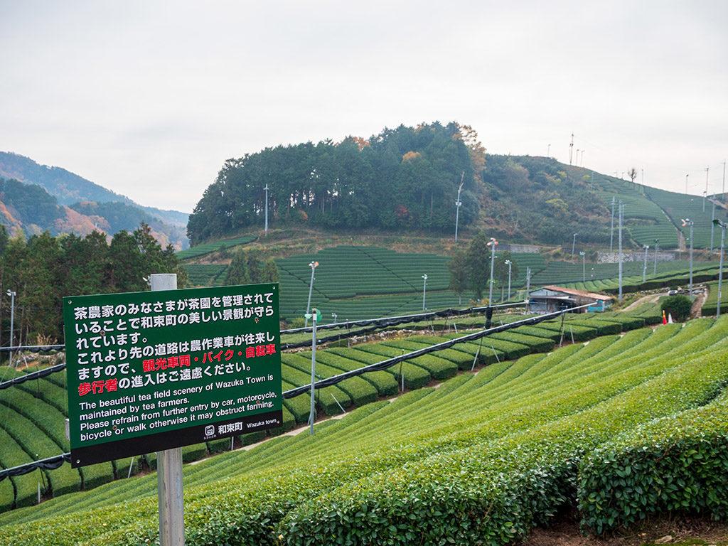和束町茶畑には入らないように