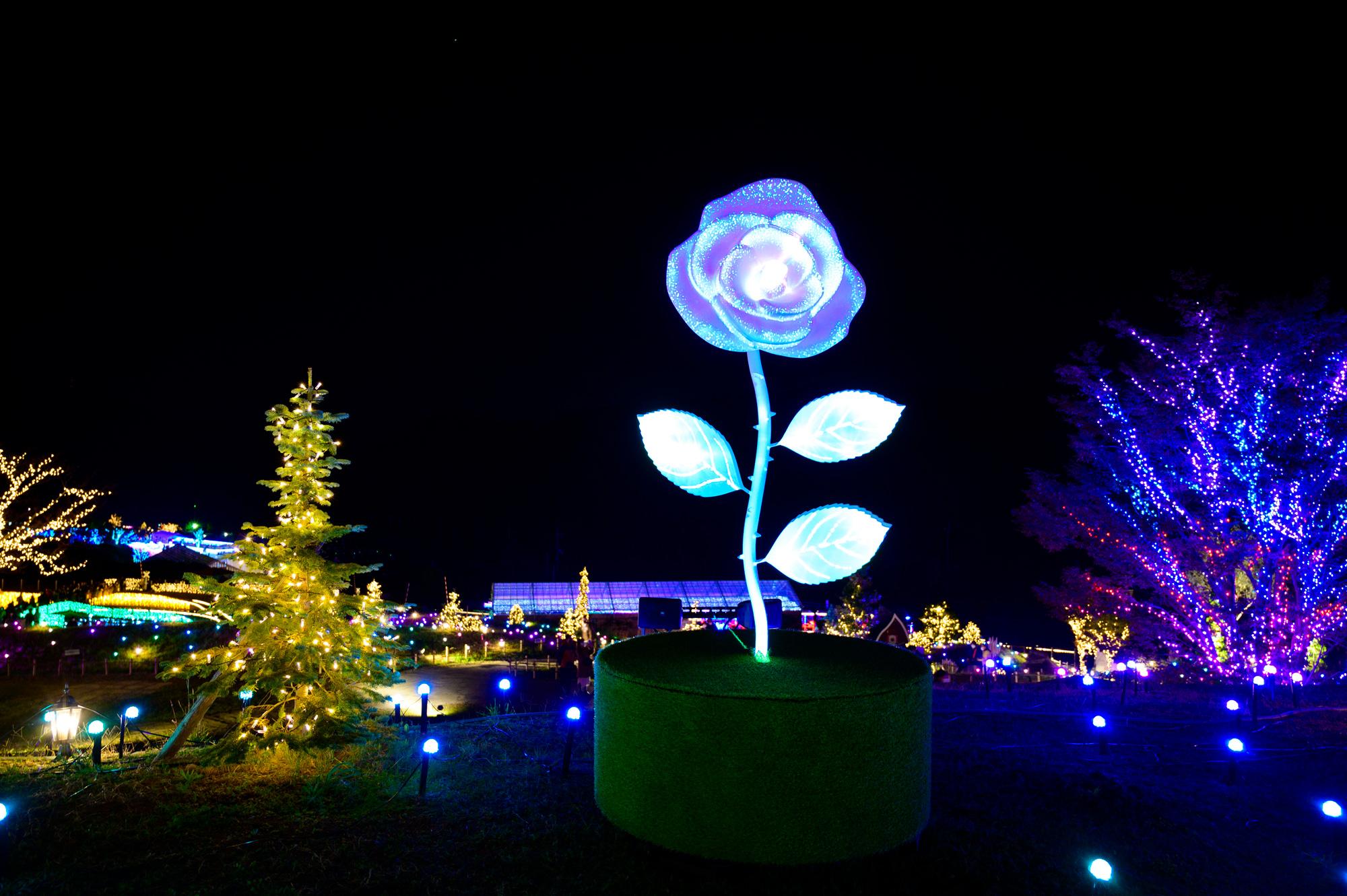 ローザンイルミ2020 奇跡の青いバラ